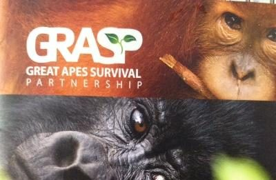 Foto : Capture cover majalah GREAT APES SURVIVAL