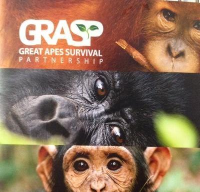 Foto : Capture cover majalah GREAT APES SURVIVAL