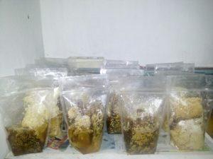 Lebah madu hasil panen yang sudah siap dijual. Foto Monga.id/ IST