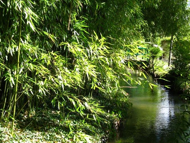Fakta unik tentang fungsi bambu. Foto dok. Housing Estate