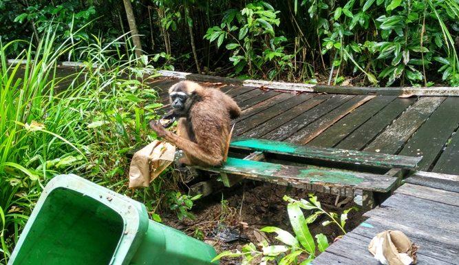 Foto kelempiau yang memakan sisa-sisa makanan nasi dari pengunjung dan tak jarang sampah menjadi berserakan. Foto: IST/ Petrus Kanisius