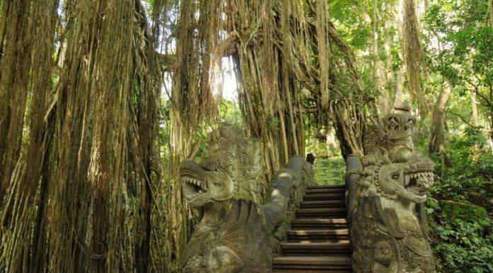Pohon Kayu Ara. Foto : IST/Hamasah Izz-Satu Jam
